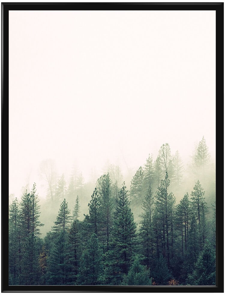 misty-forest
